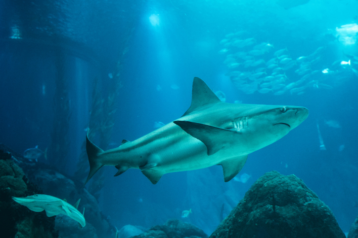 Shark Tank Lesson Plans